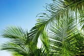 Palm Leaf On Sky Background. Blue Green Tropical Nature Photo. Sunny Tropic Paradise Banner Template poster