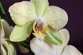 Orchid Flower. Flower In Garden At Sunny Summer Or Spring Day. Flower For Postcard Beauty Decoration poster