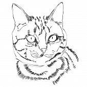 Cat Head Icon. Cartoon Head Cat Face. Cat Logotype Concept. Inspiration Logo Design Head Cat poster
