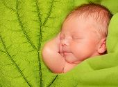 Sleeping Newborn Baby Boy in a Green Leaf Blanket