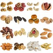 large collection of nuts, seeds isolated on a white background