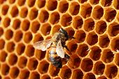 image of beehive  - yellow beautiful honeycomb with honey and bee - JPG