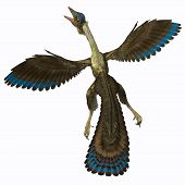 foto of pterodactyl  - Archaeopteryx is known as the earliest bird and was a bridge species between dinosaurs and modern birds - JPG
