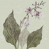 Hand drawn hosta flower in retro style
