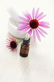 echinacea purpurea alternative medicine - beauty treatment