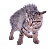 stock photo of mew  - Small 3 months old kitten looking scared - JPG