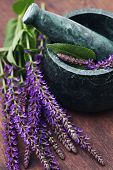 pic of purple sage  - mortar and pestle with fresh sage flowers  - JPG