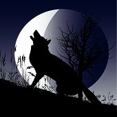 picture of wolf moon  - Background illustration with a wolf howling at the moon - JPG