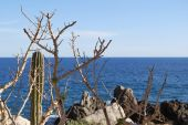 stock photo of cortez  - Prickly trees by the sea of Cortez - JPG