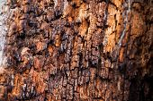 picture of decomposition  - Close view of an old decaying tree trunk - JPG