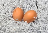 Two Eggs In The Pile Of Torn Paper Bits