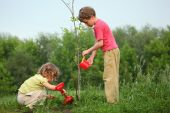 stock photo of planting trees  - kids plant the tree on spring day - JPG
