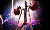 stock photo of human kidneys  - Digital illustration of human kidney in digital background - JPG