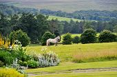 picture of enormous  - Beautiful white horse on the middle of the enormous field - JPG