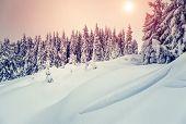 stock photo of coniferous forest  - Amazing evening winter landscape - JPG