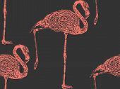 picture of pink flamingos  - vector vintage illustration of a pink flamingo - JPG