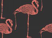 pic of pink flamingos  - vector vintage illustration of a pink flamingo - JPG