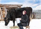 picture of milkmaid  - woman with a bucket milking near cow - JPG
