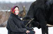 image of milkmaid  - woman in headscarf near cow in winter yard - JPG