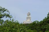 stock photo of budha  - View of the Big Budha of Phuket throught the trees