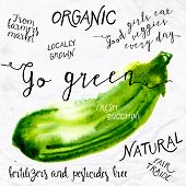 image of 1950s style  - Vector illustration of watercolor zucchini - JPG