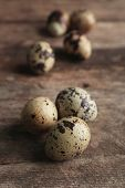 picture of bird egg  - Bird eggs on wooden background - JPG