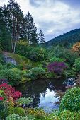 stock photo of garden eden  -  In a small pond - JPG