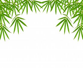 picture of bamboo leaves  - bamboo leaves isolated on white background clipping path included - JPG