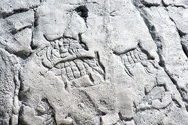 picture of primite  - Primitive artwork on a rock animals and symbols on white stone - JPG
