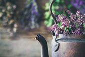 Vintage Rustic Tea Kettle Full Of Thyme Flowers For Healthy Herbal Tea. Hanging Medicinal Plants On poster