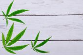 Leaves Of Cannabis On A Wooden Table, Top View, Free Space. poster
