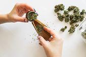 Close Up Of Marijuana Blunt With Grinder. Marijuana Use Concept. Woman Rolling A Marijuana Joint On  poster