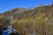 Early Spring Landscape On Mountain River Bank With Blooming Pussy Willow Bushes At Foreground. Melti poster