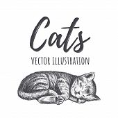 Kitten Sleeps Vector Illustration. Kitty Hand Drawing. The Cat Is Sleeping poster