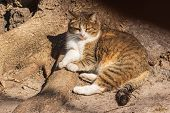 A Cute Cat Lies On The Roots At The Base Of A Powerful Tree Under The Rays Of The Sun. Close-up. Dom poster