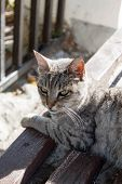Grey Striped Stray Street Mongrel Cat With The Fragmentation Ear Resting On The Bench On The Street. poster