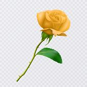 Beautiful Yellow Rose On Long Stem With Leaf And Thorns Isolated On White Background, Decoration For poster