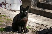 Stray Black Cat Is Sitting In The Backyard. Mystical Black Cat With Green Eyes. Deep-brown Street Ca poster