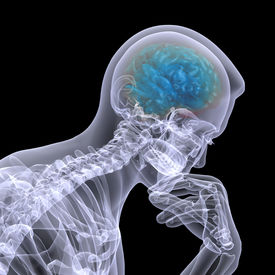 picture of thinkers pose  - X-Ray of a male skeleton in a thinker pose with his brain displayed.