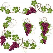 image of grape-vine  - A set of elements from the vine for decoration - JPG