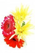 stock photo of tuberose  - red and orange gerbera - JPG