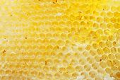 foto of beehives  - Yellow honeycomb - JPG