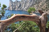 stock photo of promontory  - Nice old curved tree on background with promontory and lagoon - JPG