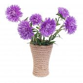 The beautiful blue aster flowers in a vase isolated
