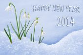 picture of life events  - Happy New Year 2014 greeting card group of snowdrops - JPG
