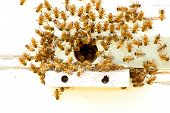 stock photo of beehive  - Bees at a beehive - JPG