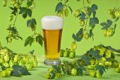 stock photo of bine  - still life with beer glass and hop cones - JPG