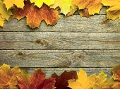 stock photo of october  - autumn background with colored leaves on wooden board - JPG