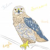 picture of buzzard  - sketch funny cartoon colorful bird Rough - JPG