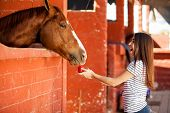 foto of stable horse  - Cute girl being taken by surprise by her horse while she was feeding him an apple - JPG